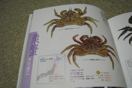 魚図鑑6.JPG