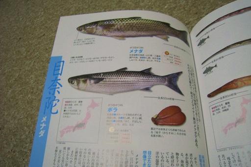魚図鑑8.JPG