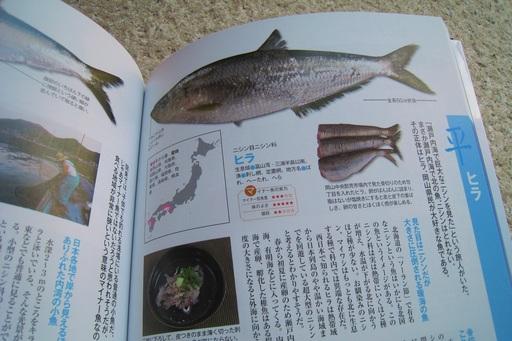 魚図鑑9.JPG
